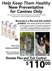 Donate Flea and Tick Control for 4 Shelter Dogs for 3 Months 202//271