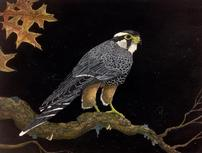 Autumn Falcon Painting <br />by Doug Hiser 202//153